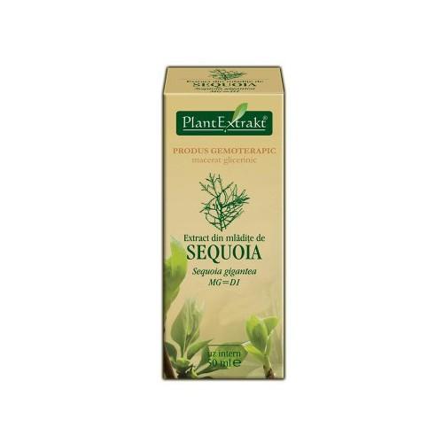 Extract din mladite de sequoia (Sequoia gigantea) 50 ml Plant Extrakt